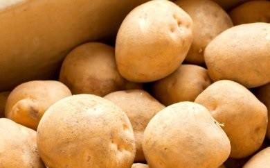 【N008】「馬鈴薯」10㎏