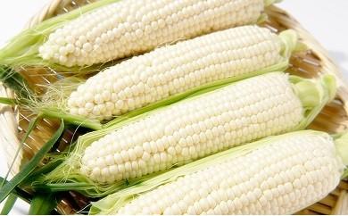 AG05 減農薬とうもろこしホワイトショコラ10本入り 【25t】