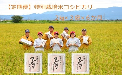 D14【定期便】特別栽培米コシヒカリ(2㎏×3袋×6ヵ月)