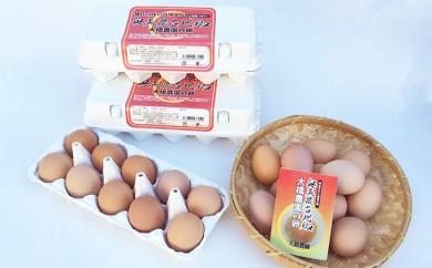 [№5533-0026]神代の味の再現 奥美濃古地鶏の卵