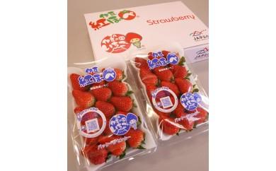 【先行予約】005-004 新鮮いちご!伊豆紅ほっぺ(280g×2パック)