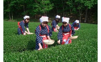 005-020 チャレンジ茶摘み体験券(1名様用)