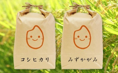 Q028 『近江米』 特別栽培 食べくらべセット コシヒカリ5kg+みずかがみ5kg【10000pt】