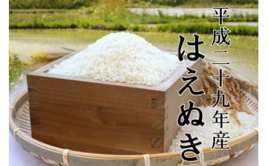 平成29年産 鮭川産「はえぬき」20kg