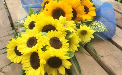 [№5651-0397]南房総産 生花(ひまわり) 花束 約17本