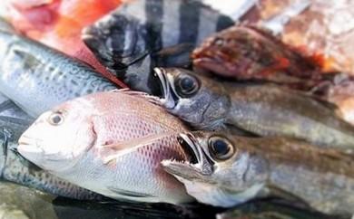 [№5651-0442]南房総産  季節の鮮魚直送便