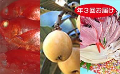 [№5651-0451]季節のふるさと便り 南房総とみうら「海・山の幸」セット定期便(年3回)