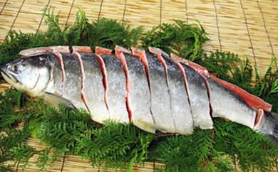 [№5651-0496]新巻鮭1本(切身) 1.5kg前後(北海道産)