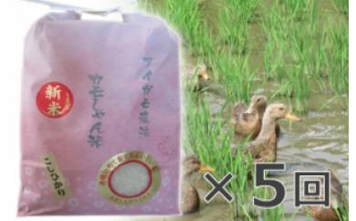 D-52カモしゃん米 ×5回 【定期便】