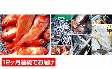 [№5651-0414]毎月お届け!お魚好きな2~3名様向 お魚12ヶ月