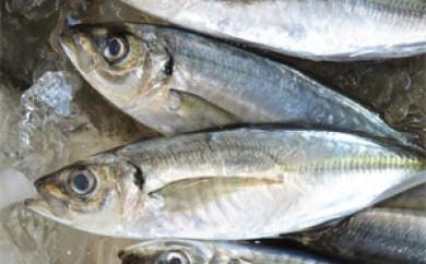 [№5651-0437]南房総産 黒潮育ち鮮魚セット