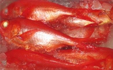 [№5651-0436]南房総産 黒潮育ち高級「金目鯛」