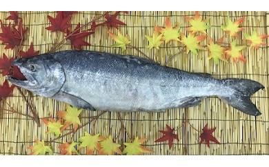 極上荒巻鮭