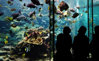 【M001】串本海中公園水族館&海中展望塔入場ペア券【45pt】