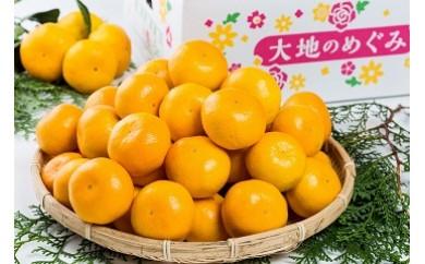 L-24 大鋸農園の甘果坊(小玉)5kg