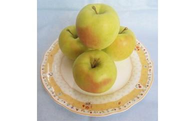 横手産りんご「ぐんま名月」約5kg【1026280】