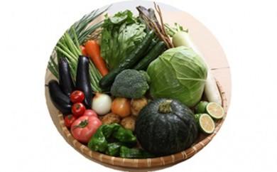 [№5632-0086]●旬盛り 知産知消の 野菜箱●