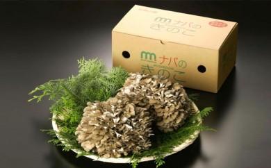 [№5815-0061]特選舞茸 1kg箱