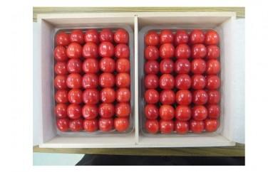 0056-005 さくらんぼ(佐藤錦)1kg(500g×2)桐箱入