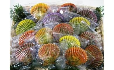 冷凍蒸し緋扇貝(ひおうぎがい)20枚