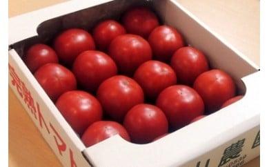 179 美味しんぼに登場したトマト「桃太郎」16~25玉 石山農園(ギフト箱入)