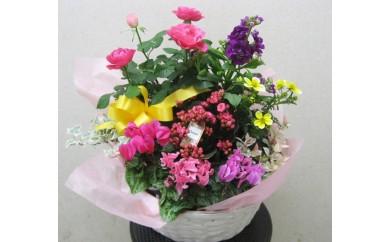 季節の花ギフト(ポットアレンジ)