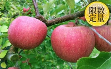 [№5805-1527]♪フルーツ王国山形♪サンふじりんご5kg