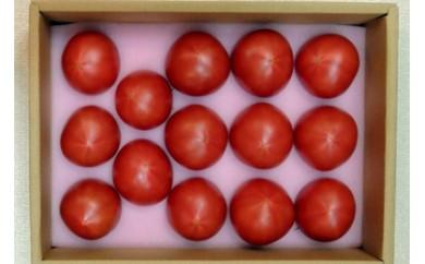 25 掛川産フルーツトマト「待ってたトマト」(ギフト箱入)