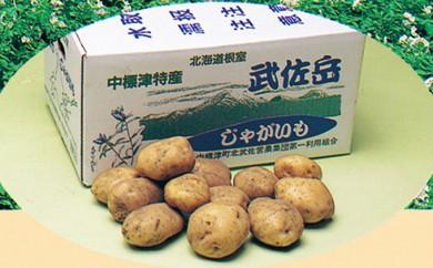 [№5889-0121]北海道 中標津町産ジャガイモ 約20kg