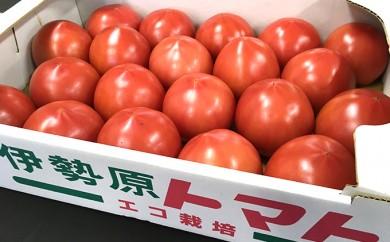 [№5862-0385]H30年発送 栄養たっぷり トマト農家片野さんちの完熟トマト