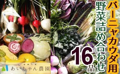 季節のバーニャカウダ用野菜詰め合わせセット16品(イタリア野菜・珍野菜など)