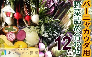 季節のバーニャカウダ用野菜詰め合わせセット12品(イタリア野菜・珍野菜など)