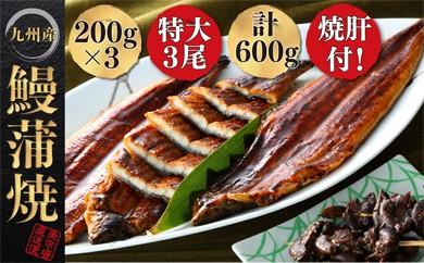 A1-02-01 ふっくらとろける九州産うなぎ蒲焼3尾と焼肝の贅沢セット
