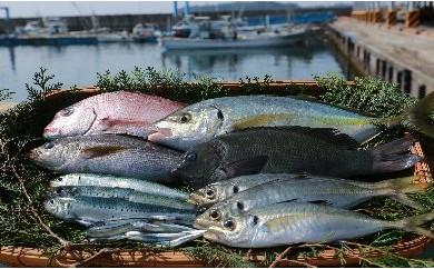 5-1 あくね旬の魚