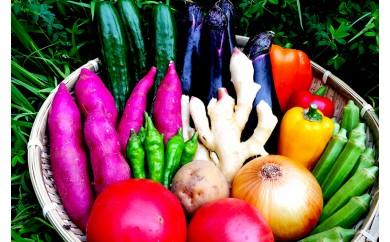 南国土佐の新鮮お野菜詰め合わせ