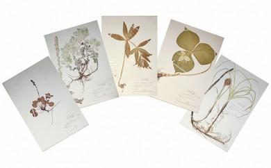 [№5749-0225]湖水地方牧場の希少な植物標本ポストカード20枚セット