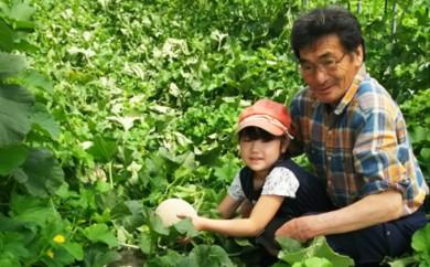 [№5742-0374]有機栽培『赤肉 街道メロン』1.6kg×3玉