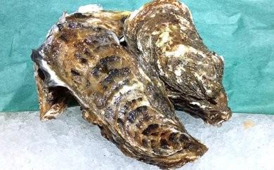 [№5742-0366]海のミルクサロマ湖産殻付2年物カキ貝 4kg(25~30個入)【カキナイフ付】