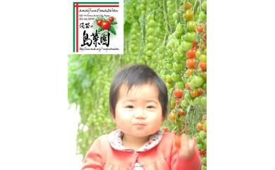 い-29 淡路の島菜園 特選トマトセット