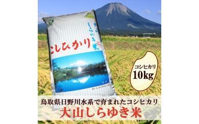 【19032】大山しらゆき米10㎏(精白米・コシヒカリ)