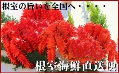 CB-70001 【北海道根室産】根室海鮮の茹でたて「チルド便」花咲ガニ2~3尾(1.8kg)[333128]