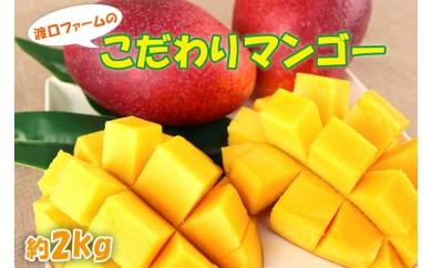 【2019年発送】渡口ファームのこだわりマンゴー約2kg(4~6玉)
