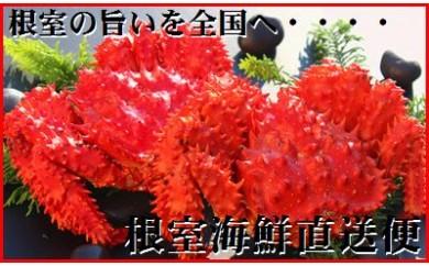 CB-70002 【北海道根室産】ボイル極上花咲ガニ2~3尾(2.2kg)[333130]