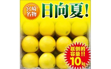 A188 【宮崎県限定】魅力たっぷり日向夏(なんと10kg)