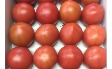 B510 フルーツトマト「恋のつぼみ」プレミアム