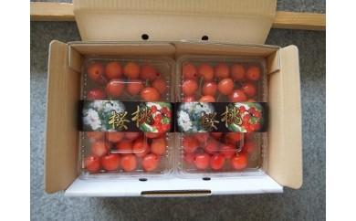 0056-003 さくらんぼ(佐藤錦)1kg(500g×2)バラ詰め