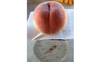 D081 でっかい、甘い桃、食べらんしょ もも/「西王母」1.2kg(2玉)【56pt】