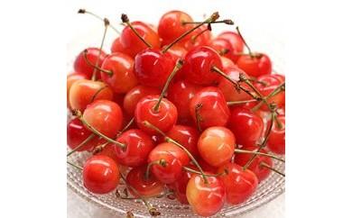 D082 さくらんぼ日和 赤い宝石の愛しい果実  さくらんぼ/佐藤錦(500g箱/バラ) 【64pt】