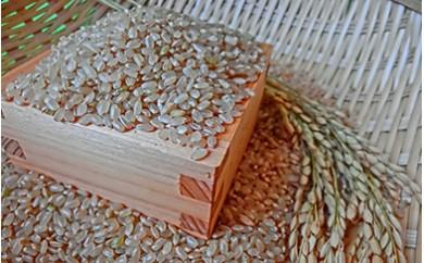 21-K 会津坂下町産 コシヒカリ10kg(29年度産米・会津エコ米)(玄米)