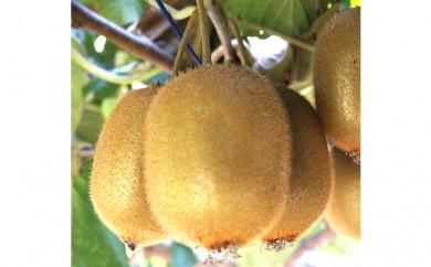 [№5672-0146]白石農園の栄養の詰まったキウイフルーツ4kg クレジット限定